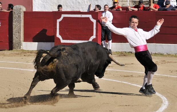 Gran festival taurino en Carbajosa