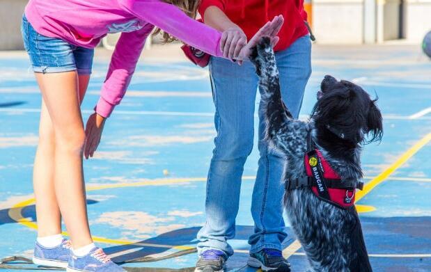 3 clases de educación canina