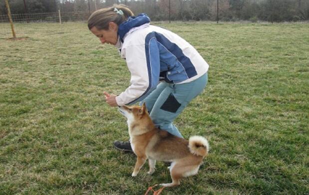 2 clases de adiestramiento canino