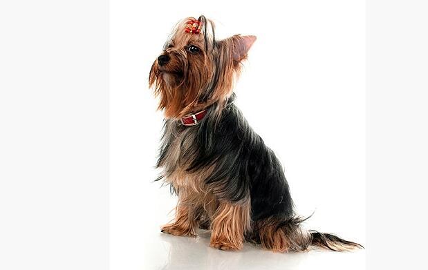 Sesión completa de peluquería canina
